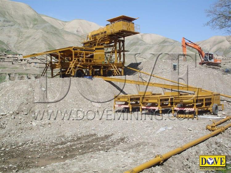 DOVE gold plant