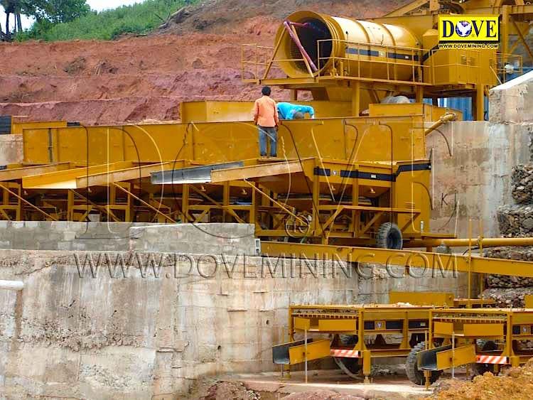 DOVE gold and diamond plant